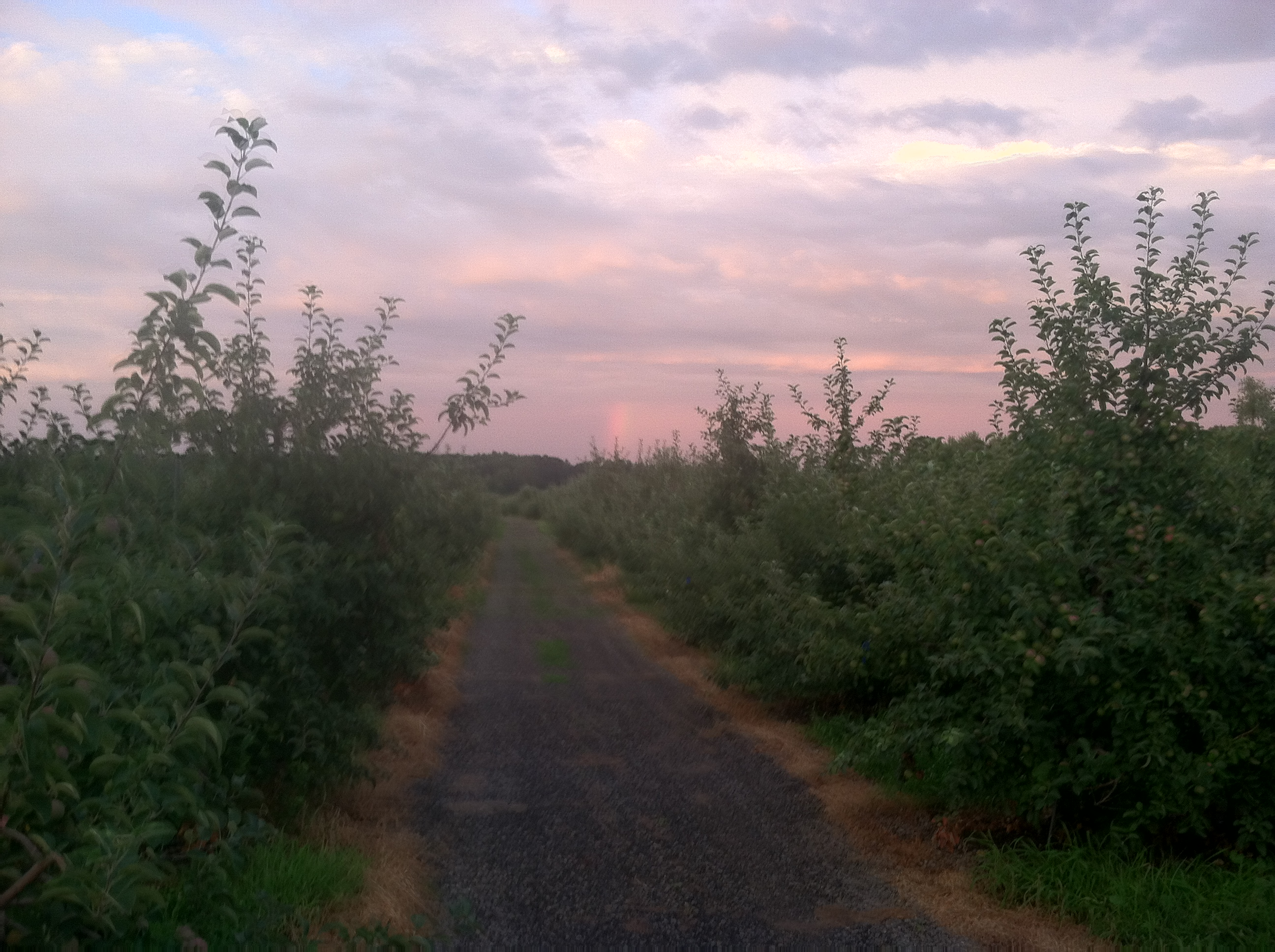 Apple Orchards in Downtown